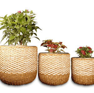Seagrass Planters